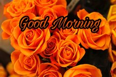 Good Morning Flowers Images 2020 - Best New Collection Lovely Good Morning Images, Latest Good Morning, Good Morning Images Download, Good Morning Flowers, Good Night Image, Good Morning Wishes, Cute Rose, Image Archive, Good Afternoon