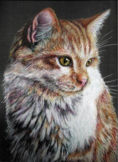 Colored Pencil Tiger Cat Drawing by Portraitsbyaleks on Etsy, $300.00