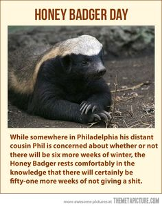 Honey Badger Day… all that stands out to me about this is that Phil does NOT live in Philadelphia! #PAgirl