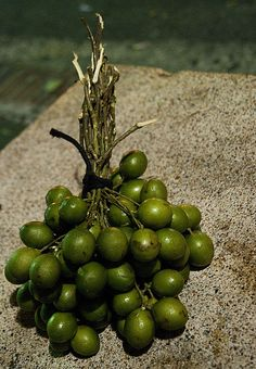 "PR Fruits....""Quenepas"" I used to gulp these down like there was no tomorrow.Sounds like Kah-nay-pay. Bite the lime looking thing and suck out the seed which is covered in pulp which you then suck from the seed. A little bit sour but Delicious!!!"