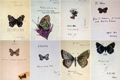 """Nabokov's Drawings: """"The drawings of butterflies done by Vladimir Nabokov were intended for 'family use.' Brian Boyd says """"in these highly personal and affectionately playful drawings the scientific accuracy Nabokov needed in thousands of illustrations of the specimens he studied under the microscope was no longer relevant, and his imagination could take flight."""" None portray real butterflies. The names often have some connection to the book they adorn and play on Russian and English words."""