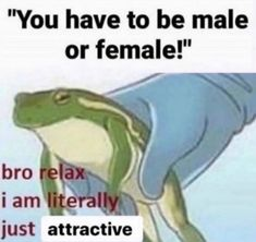 """zach s-w on Twitter: """"Only You Can Prevent Gender"""" / Twitter Stupid Memes, Funny Memes, Lgbt Memes, Cute Frogs, Free Therapy, Cry For Help, Mood Pics, Reaction Pictures, Haha Funny"""