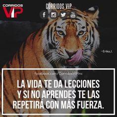 Así que abusados..!!  ____________________ #teamcorridosvip #corridosvip #corridosybanda #corridos #quotes #regionalmexicano #frasesvip #promotion #promo #corridosgram - http://ift.tt/1HQJd81