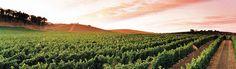 Van Duzer Vineyards - Willamette Valley, Oregon