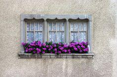 Windows in Switzerland (by Michael Casey)