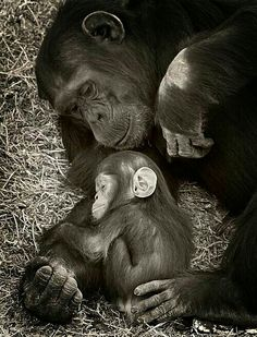 Love of a mother ♡