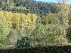 Herbst im Schwarzwald...