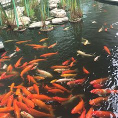 #Guayaquil#aeropuerto#fishes
