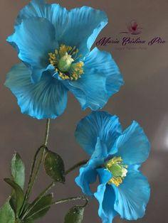 House plants blue flowers photography, dusty blue flowers, blue flower art, p. Flower Images, Flower Pictures, Flower Art, Cactus Flower, Exotic Flowers, Amazing Flowers, Beautiful Flowers, Tropical Flowers, Purple Flowers