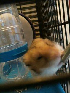 Dit is mijn hamster hammie