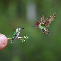 365 Days of Miniature art (June) on Behance Pretty Birds, Beautiful Birds, Animals Beautiful, Hummingbird Pictures, Hummingbird Art, Exotic Birds, Colorful Birds, Origami, Paper Birds