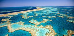 Häkelt mit WWF für die Rettung des Great Barrier Reef | DaWanda Blog