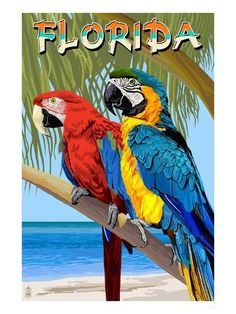 Retro poster of tropical birds - Parrots: Retro Poster Bird Wall Art by Lantern Press available at Great BIG Canvas. Tropical Birds, Exotic Birds, Colorful Birds, Animals And Pets, Cute Animals, Parrot Drawing, Retro Poster, Cross Paintings, Bird Paintings