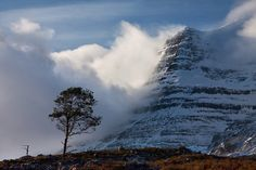 """Caledonian Pine, Glen Torridon,West Highlands of Scotland."" by photosecosse /barbara jones"
