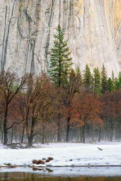 Winter Morning, Yosemite by Tony Williams