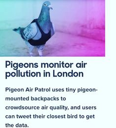 Read on Springwise.com --------------- Pigeons monitor air pollution in London.  That's really cool not to make everything to complicated by using drones spending money for their services and just use pigeons it's free and 100% effective:)