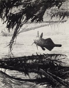 Freshwater Coelacanth, Triassic by Douglas Henderson