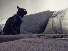 Sofá à prova de gato