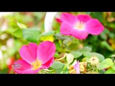 Basic Gardening Tips For Beginners - 32 Tutorial Videos Compilation