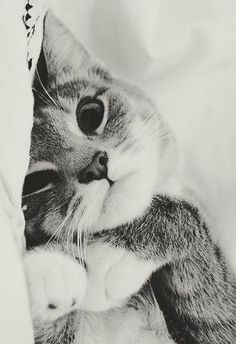Kedi Dostlarımız,Kedi Resimleri - Megaforum.COM - Forumun Bir Adım Ötesi