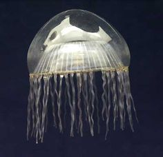 Glass jellyfish by Leopold Blaschka (1822 - 1895) and his son Rudolf (1857 - 1939).
