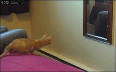 Who knew mirrors were portals all along?   15 GIFs That Can Only Be Explained By Magic