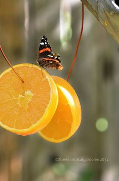 The Whimsical Gardener: Glimpses of a Spring Garden~Some Favorite Shots This orange will attract butterflies! Perhaps some birds too? What a great idea! Spring Garden, Lawn And Garden, Garden Art, Cut Garden, Outdoor Projects, Garden Projects, Butterfly Feeder, Butterfly Food, Simple Butterfly