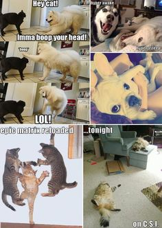 LOL puppies and kitteh cats COMPILATION STYLE, SON.