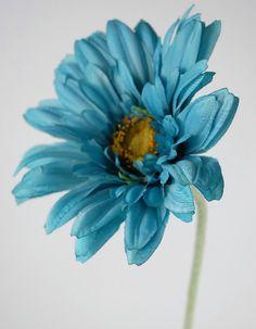 Oasis Blue Gerbera Daisies  $2.99 each / 12 for $1.89 ea.