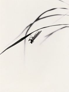 Chin-San Long 1981 Chin-San Long, was born Zhejiang Province in 1892 and passed away in 1995 at the age of He devoted himself in the . Japanese Painting, Chinese Painting, Japanese Art, Sumi E Painting, Sketch Painting, Minimal Photography, Art Photography, Tinta China, Chinese Brush