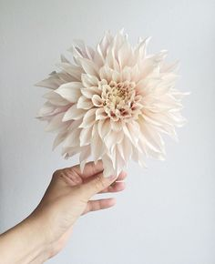 Love this Cafe au Lait Dahlia photo by @wealdblog! Thank you so much Charmaine for taking part in this month's #UnderTheFloralSpell competition on Instagram. | #flowers #cafeaulaitdahlias