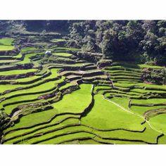 Rice terraces: Philippines
