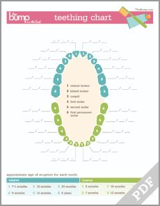 Printable teething chart for tracking when those teeth come in!