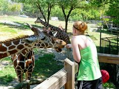 Blank Park Zoo, Des Moines, IA. Really well done little zoo. Fed a Giraffe for really cheap!!!