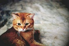 Kitty!! Dawwww