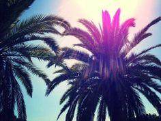 My little Paradise