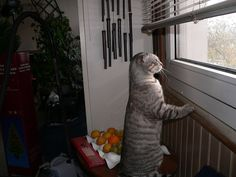 Side of the windows #funny #funny_cat #cat