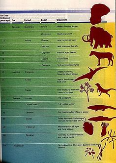 pictures of geological time scale | images geological timeline – geologic time scale [491x687 ...
