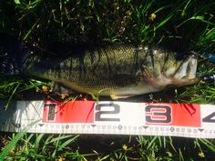 The fourth bass 2015