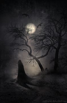 Nocturnal Whisperings  by *wyldraven~