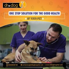 Dr Dog Hospital is only 24 Hr & No 1 Pet multipolarity hospital in Hyderabad aims to offer smiles by providing best treatment to all breads of pet Dogs, Cats. Over 7 years, we assessed needs and always provided high quality veterinary services (surgeries, consulting, medicines, pet diet & care both in-patient & Home visit. Our team of expert Veterinary doctors always round the clock to shower all the love and care to your loved one need. We are proud to be No 1 Pet Hospital. Veterinary Surgeon, Veterinary Services, Dental Services, Small Animal Hospital, Pet Hospital, Emergency Hospital, Pet Clinic, Love Your Pet