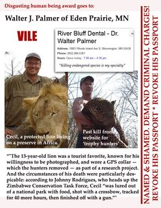 Also interesting to note: He has a criminal record stemming from poaching a black bear and lying about it: http://www.washingtontimes.com/news/2015/jul/28/man-accused-in-african-lion-death-convicted-in-08-/