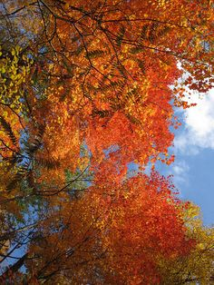 foliage....enjoy fall