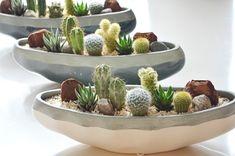 Mini Cactus Garden, Cactus House Plants, Terrarium Plants, Succulent Gardening, Cactus Decor, Succulents In Containers, Cacti And Succulents, Planting Succulents, Small Cactus