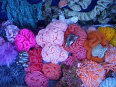 Types Of Sea Sponges Is A Picture Of A Phylum