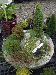 Miniature Garden - Home And Garden Potager Garden, Garden Edging, Garden Troughs, Mini Fairy Garden, Gnome Garden, Moon Garden, Garden Art, Indoor Water Garden, Hosta Gardens