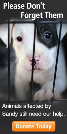 Help/tips with essay on animal cruelty.?