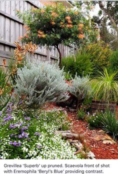 Beginner's Guide To Tropical Landscaping Design Plans Australian Garden Design, Australian Native Garden, Australian Native Flowers, Australian Plants, Australian Bush, Bush Garden, Dry Garden, Backyard Garden Design, Garden Landscape Design
