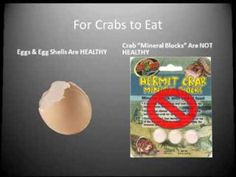 (video) A Visual Guide To Safe/Unsafe Hermit Crab Products | Sach's Crab Page ~ for more great PINs w/good links visit @djohnisee ~ have fun!