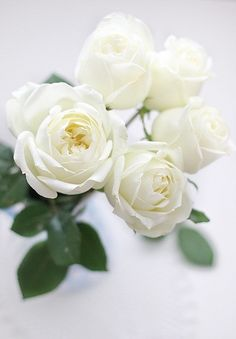White Majolica...love This For A Touch Of White/soft Pink To Compliment All  Of The Colors | Roses | Pinterest | Sprays, Spray Roses And Flowers